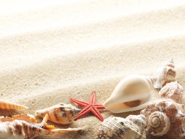Морские ракушки на песке - Фотообои (underwater-world-00076)