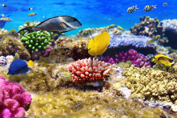 Фотообои для ванной комнаты рыбки (underwater-world-00156)