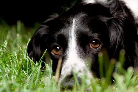 Фотообои собака в траве (animals-0000064)