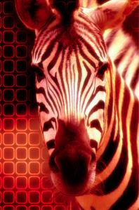 Фотообои зебра дизайн (animals-0000087)