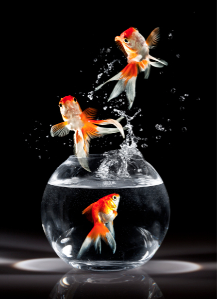 Фотообои золотая рыбка аквариум (animals-0000217)