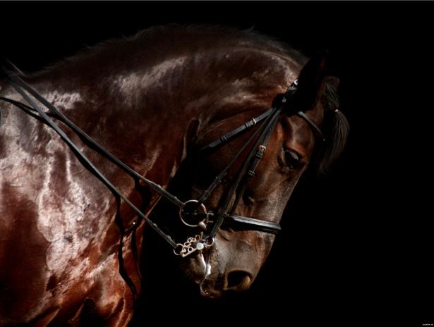 Фотообои красивая лошадь, конь (animals-0000233)