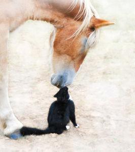 Фотообои лошадь и кот (animals-0000389)