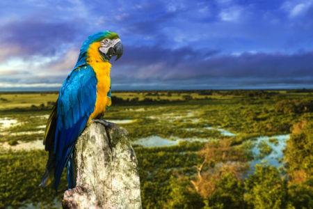 Фотообои попугаи ара и пейзаж (animals-0000498)