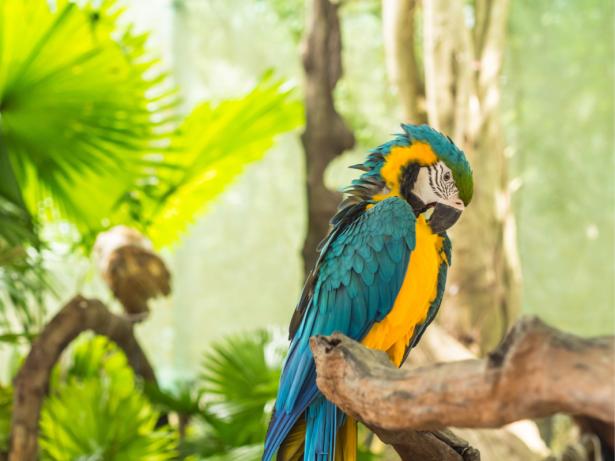 Попугай ара фотообои 1 (animals-0000500)