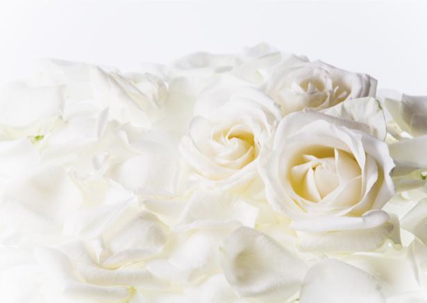 Белые розы фотообои на стену цветы (flowers-0000098)
