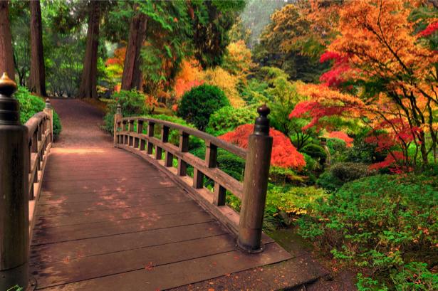 Фотообои мост парк фото (nature-00405)