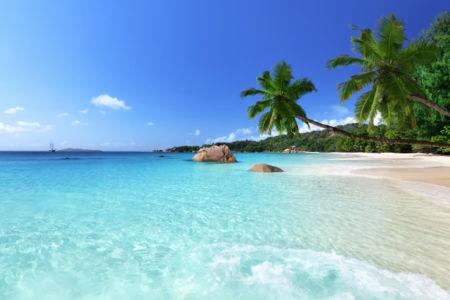 Фотообои пальмы на морском побережье (sea-0000303)
