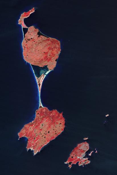 Фотообои на стену красное на черном (terra-00220)