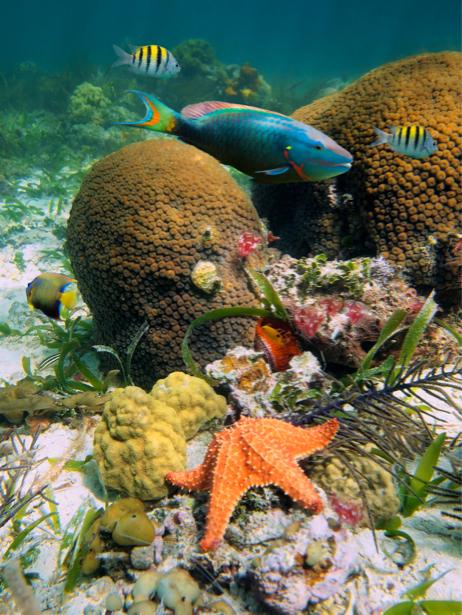 Фотообои 3д подводный мир в море (underwater-world-00001)