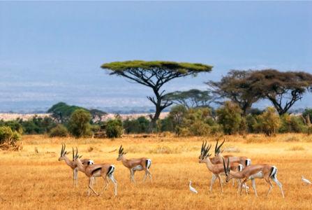Фотообои с природой саванна лань (animals-0000025)