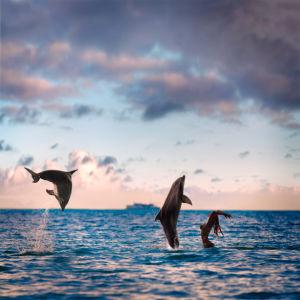 Фотообои дельфины в прыжке закат (animals-0000069)