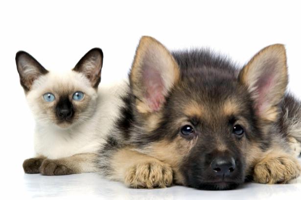 Фотообои кошка и собака (animals-0000116)