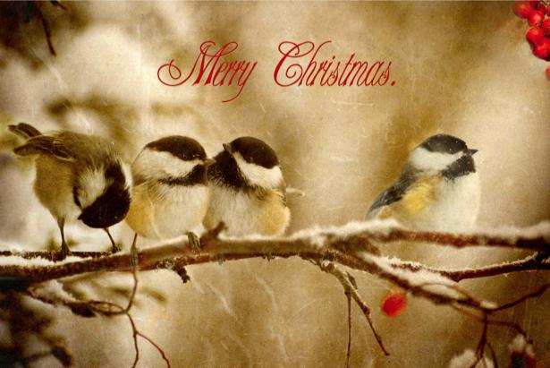 Фотообои зимние птицы (animals-0000317)