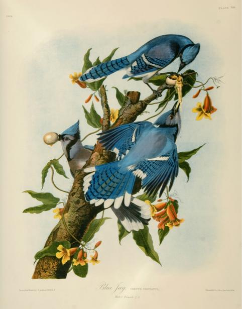 птицы на дереве, ветке (art-0000049)