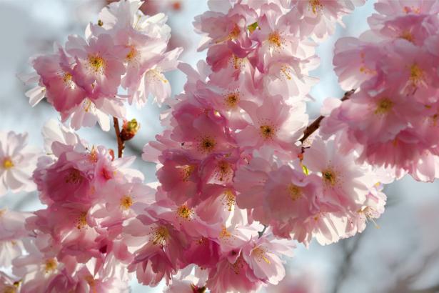 Фотообои цветов на стену Цветущая ветка (flowers-0000009)