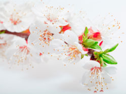 flowers-0000325