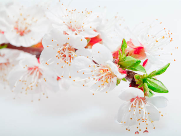 Обои фото Цветущая ветка (flowers-0000325)