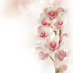 flowers-0000387