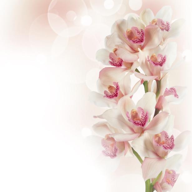 Ветка белой орхидеи - Фото обои на стену (flowers-0000387)