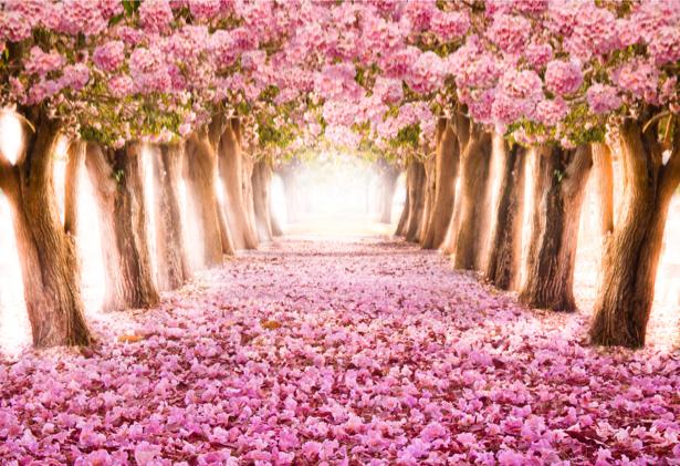 Фотообои розовый цветущий парк (nature-0000690)