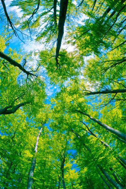 Фотообои деревья небо (nature-0000802)