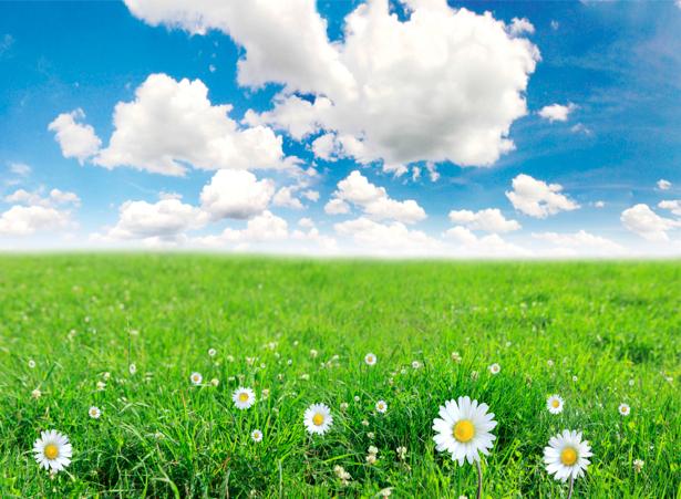 Фотообои с природой облака полевые ромашки (nature-00031)