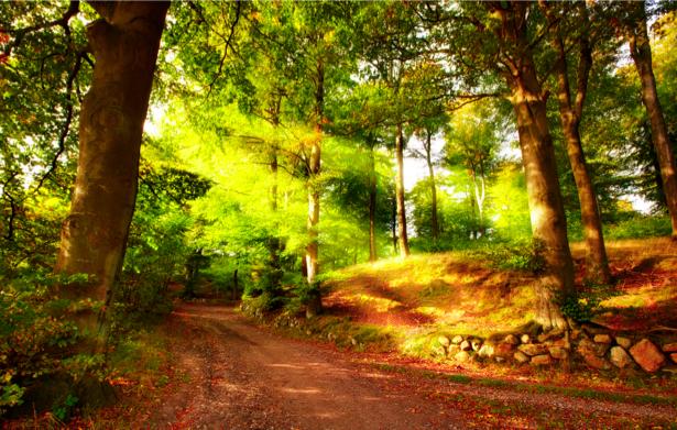 Фотообои с природой дорога в лесу (nature-00138)