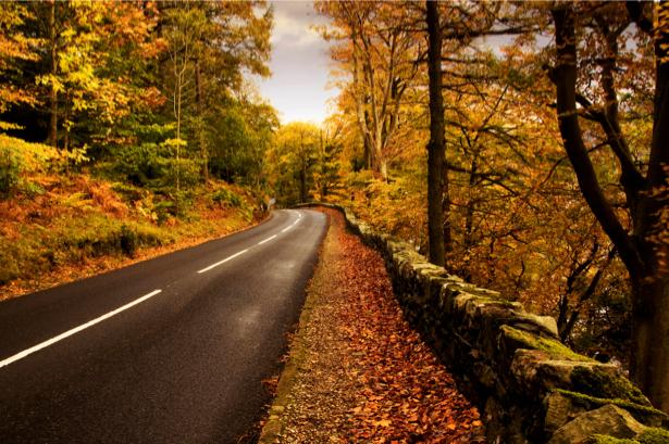 Фотообои дорога в лесу осенью (nature-00226)