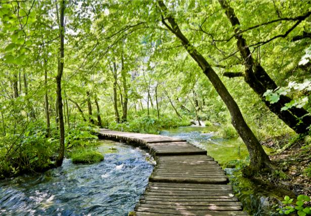 Фотообои мост река лес (nature-00248)