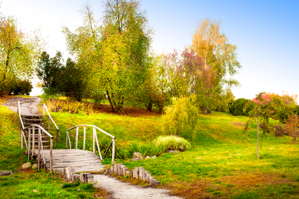 ... спальни осенний лес nature-00408 цена | Make.ua: make.ua/fotooboi/3617