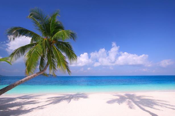 Фотообои Пальма на пляже (nature-887)