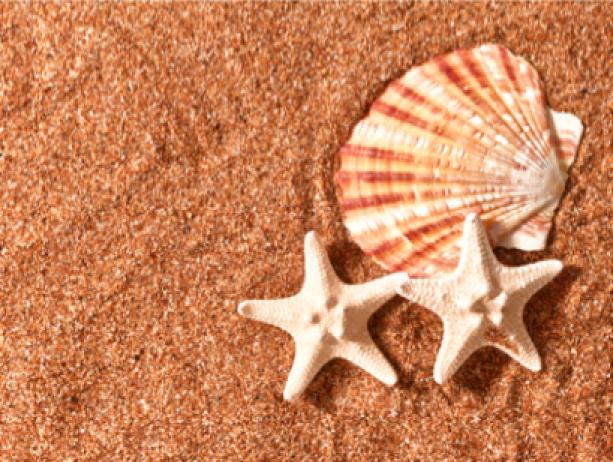 Фотообои камешки ракушки звезда (sea-0000108)