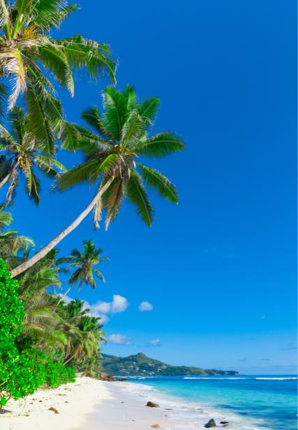 Фотообои голубое небо и пальмы (sea-0000177)