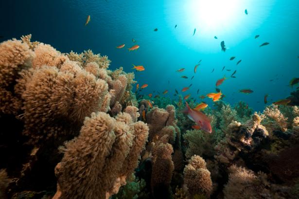 Фотообои пушистые кораллы рыбки (underwater-world-00045)