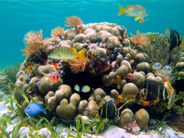 Фотообои подводный мир 3д (underwater-world-00053)