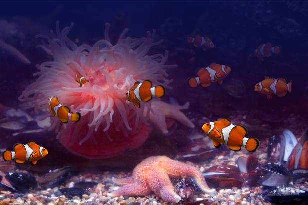 Фотообои в ванну рыбки кораллы (underwater-world-00061)