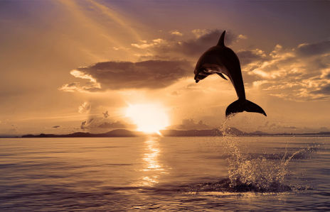Фотообои Дельфин на фоне заката (animals-515)