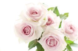 flowers-0000321