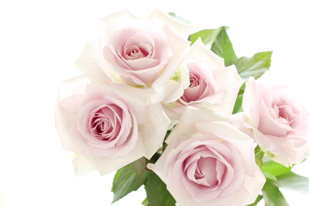Обои фото Букет белых роз (flowers-0000321)