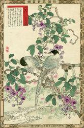 japanese-chart-1