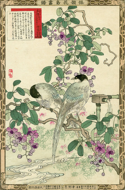 Коно птицы (japanese-chart-1)