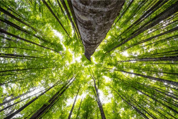 Фотообои лес снизу (nature-0000734)