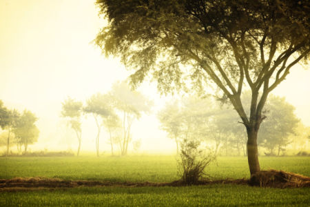 Фотообои пейзаж утро (nature-0000826)