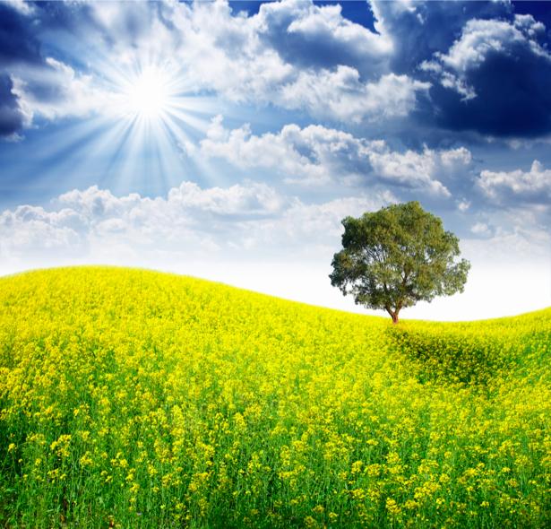 Фотообои с природой поле цветов пейзаж (nature-00120)