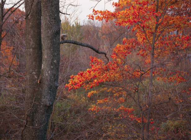 Фотообои лес осень фото (nature-00219)