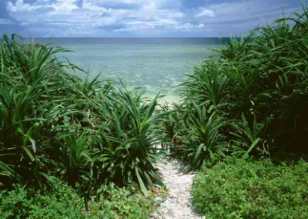 Фотообои море берег тропики (sea-0000030)