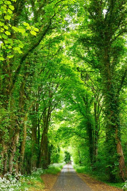 Фотообои Дорога через зеленый лес (sp18)