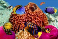 underwater-world-00133