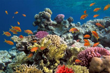 Фотообои в ванную подводная природа (underwater-world-00195)